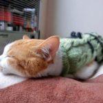 【睡眠改善】3つのリズムと質の良い睡眠で寝不足を解消