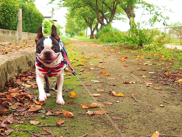 【命の現状】処分されている犬・猫の数と保健所の殺処分方法