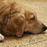 【涙活で発散!】涙腺が壊れる程泣ける犬・猫の動画集