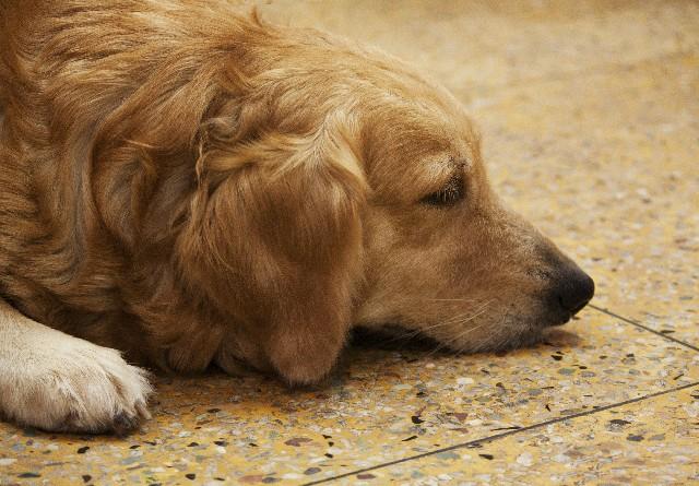 泣ける犬・猫の動画集