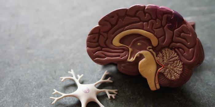 脳科学の実験結果